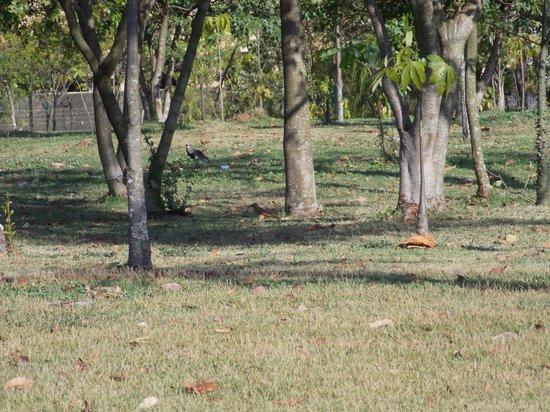 Villa Lobos Park: Pássaros nos gramados