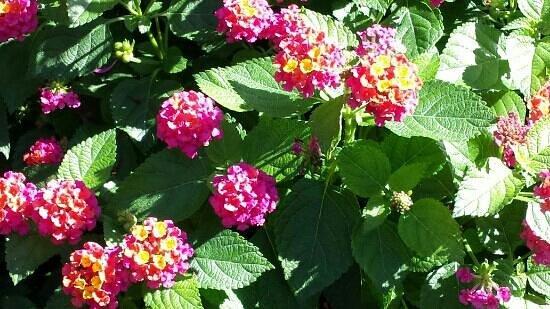 Chicago Botanic Garden: late September blooms