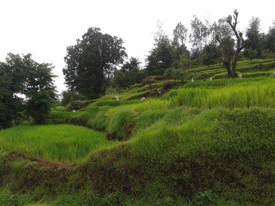 Koyna Dam: On the way to Ozarde village