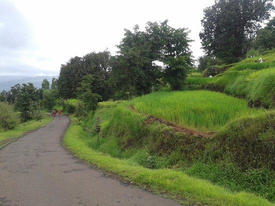 Koyna Dam: On the way to MTDC resort