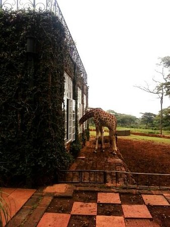 Giraffe Manor: Breakfast woth the Giraffes