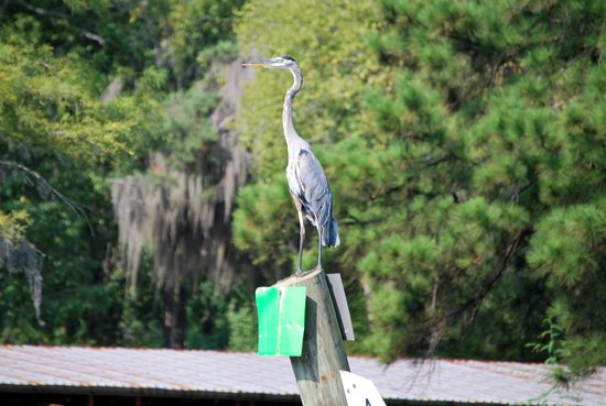 Caddo Outback Backwater Tours: .