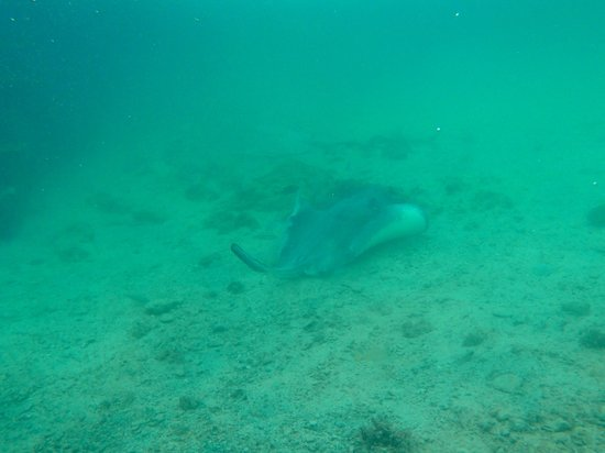 Dolphin Cove: Snorkelling
