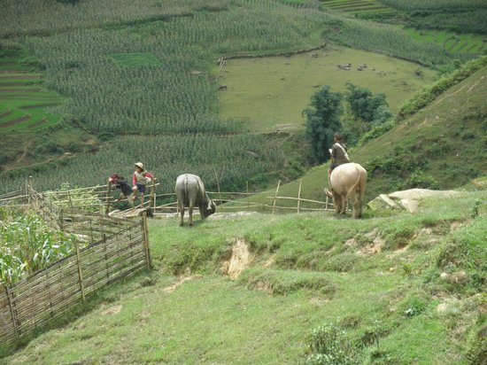 Vietnam Nomad Trails - Day Tours: children playing on the back of cows