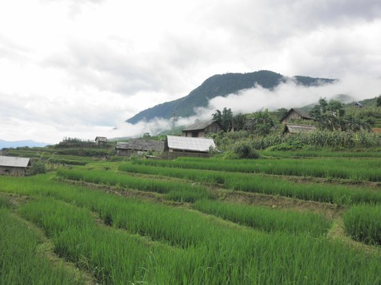 Vietnam Nomad Trails - Day Tours: cool fog covering the mountain and rice paddy