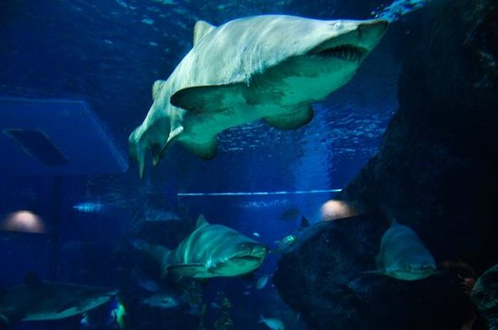 ซีไลฟ์ แบงคอก โอเชี่ยน เวิร์ล: siam ocean world