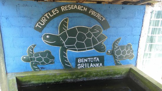 Sea Turtle Farm and Hatchery: all donations are needed for this project