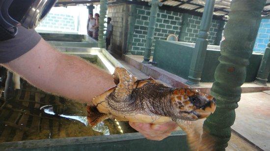 Sea Turtle Farm and Hatchery: close-up holding a turtle