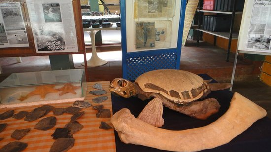 Sea Turtle Farm and Hatchery: info shop & purchase gifts