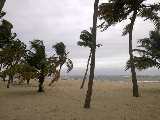 โรงแรมอาบัด เทอเทิลบีช: The beach