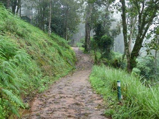 Nature Zone Resort: Way to Tree House