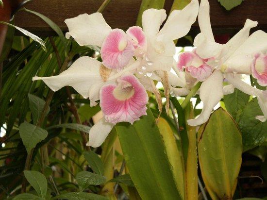 พื้นที่สันทนาการแห่งชาติโกลเดนเกท: orchids