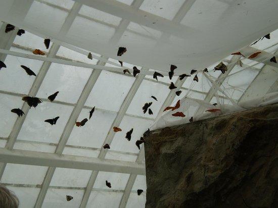 พื้นที่สันทนาการแห่งชาติโกลเดนเกท: this room dedicated to free ranging butterflies