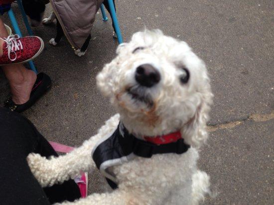 Pups N Cups: Cutie pie issie