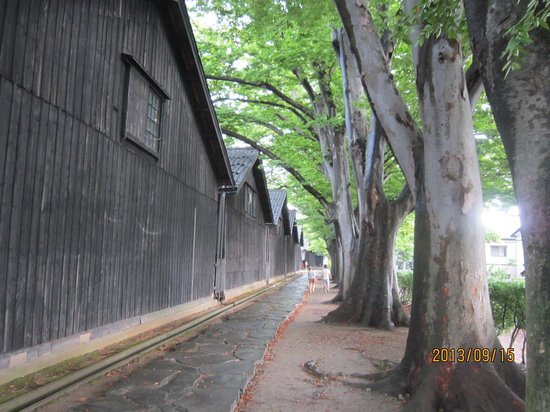 Sankyo Soko Storehouse: ケヤキ並木