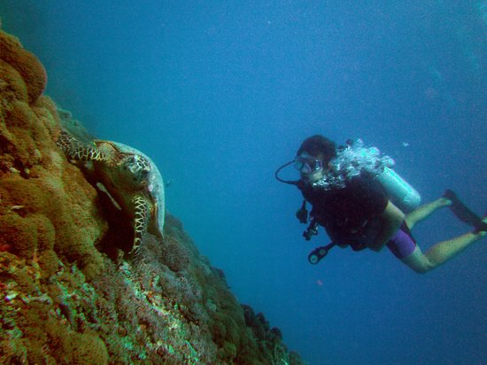 Diversia Diving: Jalil&Turtle
