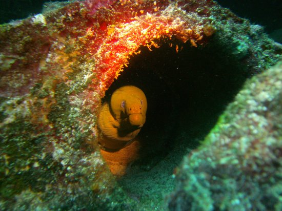 Manta Divers Cancun: C-55 Wreck is where this Moray Eel lives.
