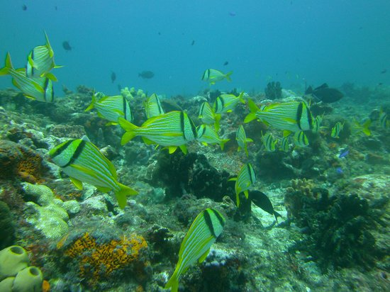 Manta Divers Cancun: The reef was georgeous.