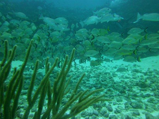 Manta Divers Cancun: So many fish!