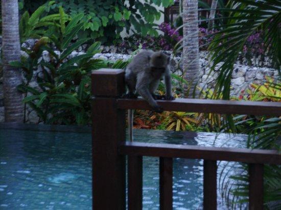 โรงแรมการ์มา กันดารา: A friend stopped by for Breaki