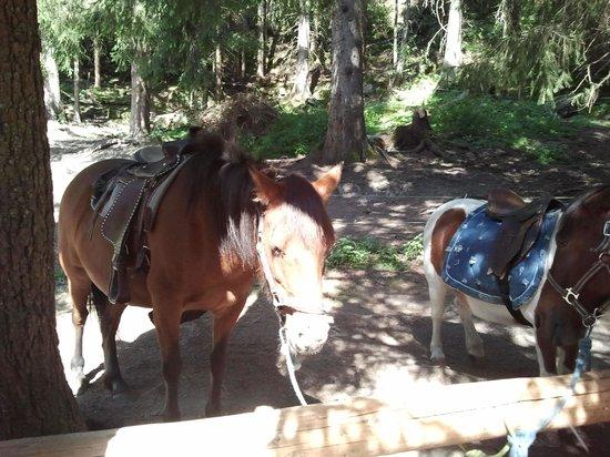 Le Paradis des Praz: pony nice ride for kids