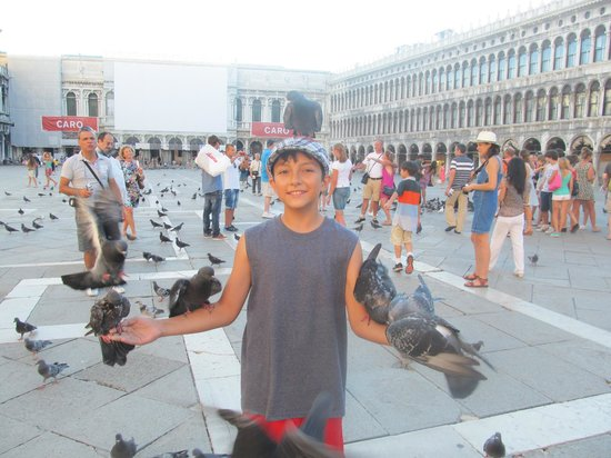 Piazza San Marco: Pigeons in St Marks Square