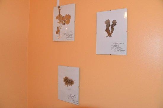 Hotel Laugarholl: Детские гербарии