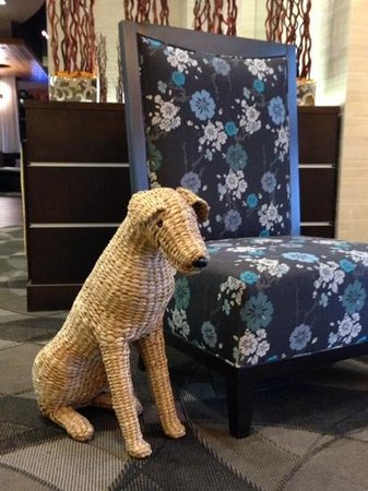 Hyatt House Falls Church: Watch out for the dog, he moves around the lobby on a daily basis.