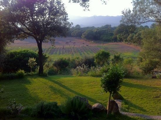 Pozzo di Mastri: vue sur le potager et l'enclos