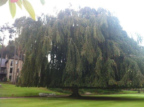 Breathe Detox Retreats: I love this tree