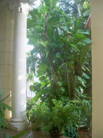 Casa Particular de la Dra Flora Roca: El portal - desde otro ángulo