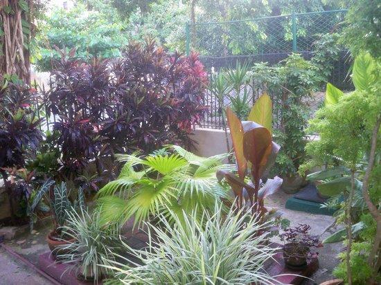 Casa Particular de la Dra Flora Roca: Maravillosa naturaleza