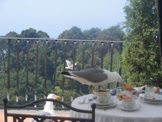 Casa Morgano: desayunando en la habitacion