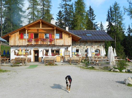 Agritur Malga Secine: Papaya, il mio cane, davanti a Malga Secine