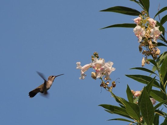 The Inn at Mariposa: Hummingbird in front of terrace