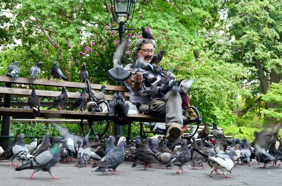 Washington Square Park : The pigeon man