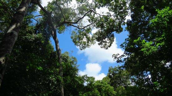 Arabuko-Sokoke Forest: Vista de arabuko
