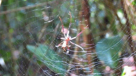 Arabuko-Sokoke Forest: Arañas hay unas cuantas a lo largo del camino