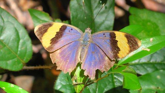 Arabuko-Sokoke Forest: Preciosas mariposas