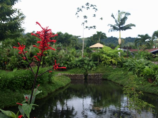 Arenal Springs Resort and Spa: Fabulous Grounds