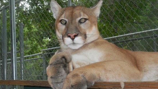 Bear Creek Feline Center: OMG - Awesome!