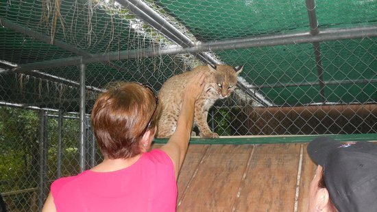 Bear Creek Feline Center: Totally awesome to pet!