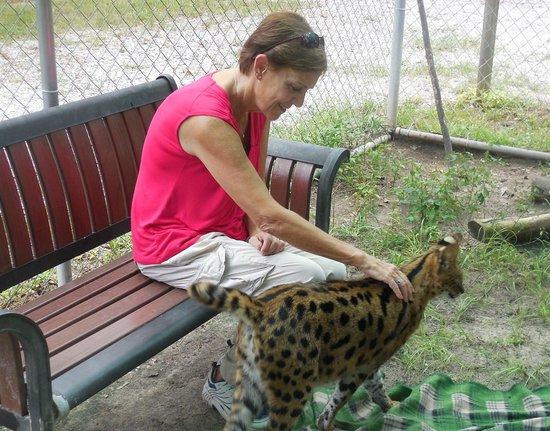 Bear Creek Feline Center: Very cool to pet the Servals!