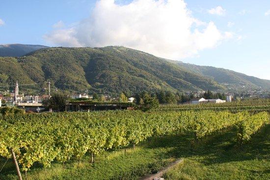 Cantina San Gregorio