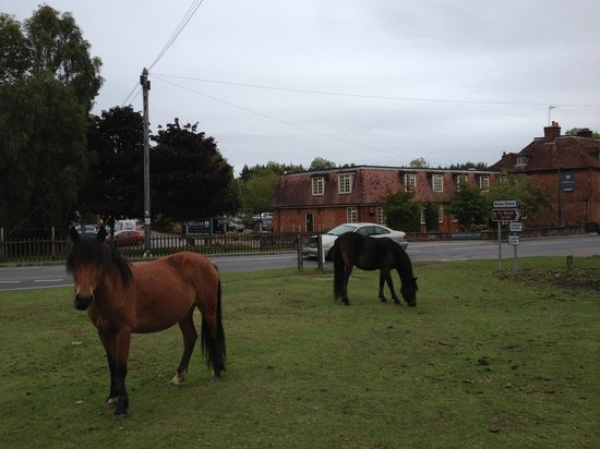 The Bell Inn: New Forest Ponies