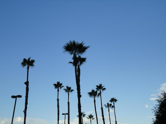 Holiday Inn Torrance: palmbomen voor het hotel.