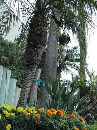 Holiday Inn Torrance: Mooie tuin.