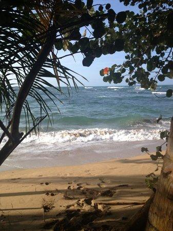 La Finca Chica : el bello Caribe costarricense