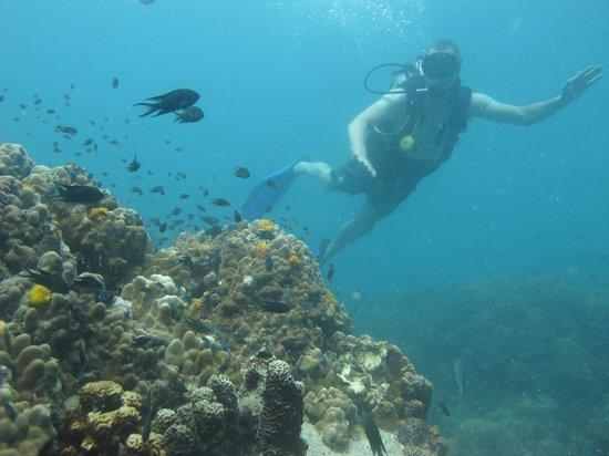 Golden Divers: mooie duikplekken!