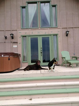 Grandview Mountain Cottages: Our pups relaxing on the front porch